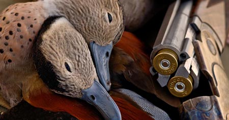 Argentina Waterfowl Hunting - Los Gauchos Outfitters