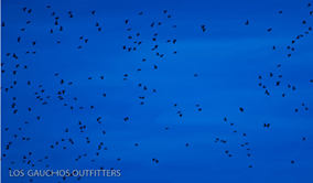 High Volume Dove Hunting - Los Gauchos Outfitters