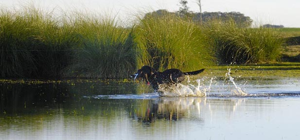 Duck Hunting Uruguay - Los Gauchos Outfitters