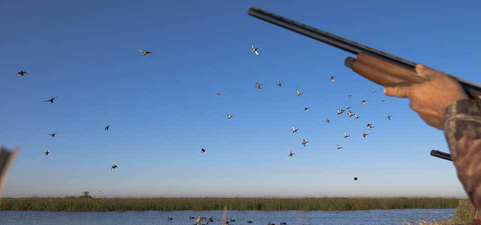 Uruguay Duck Hunting - Los Gauchos Outfitters